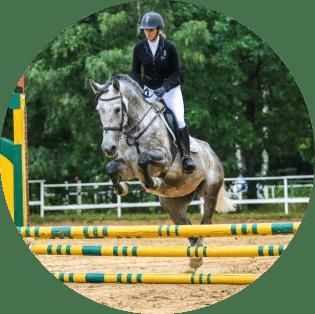 тренировки на лошадях