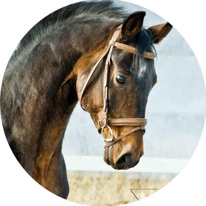 Лошадь Элексир - конюшня игогошка