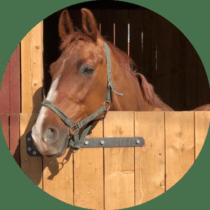 Лошадь Эмирех - конюшня игогошка