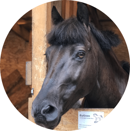 Лошадь Фру-Фру - конюшня игогошка