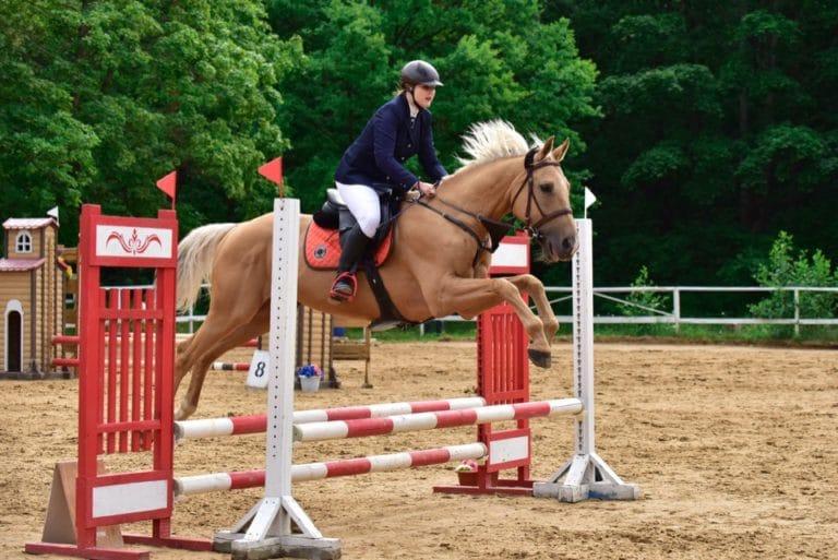конный спорт занятия
