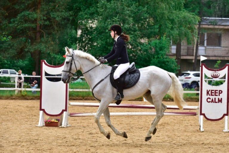обучения конному спорту