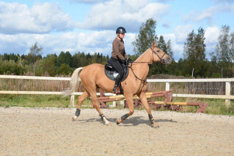 конный спорт Санкт-Петербург
